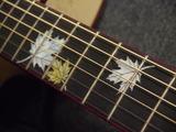 [新品特価] 価格を超えた品質と音質でギタリストを魅了するNew Hillシリーズ!メイプルモデルがちょい傷特価です!